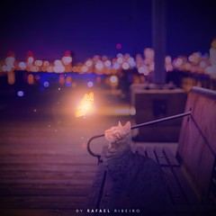 Night Cat and Butterfly Light | Composition (RafaRibeiroReal) Tags: cat butterfly lights composition photoshop color purple blue love cute night