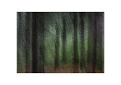 Forest Feelings. (muddlemaker1967) Tags: hampshire landscape photography thenewforest national park pine trees bracken autumn 2018 light texture icm transitions fujifilm xt1 fujinon xf 50140mm r lm ois wr