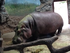 """china-zoo-2014-photo-jul-08-10-06-39-pm_14461208197_o_42245397512_o • <a style=""""font-size:0.8em;"""" href=""""http://www.flickr.com/photos/109120354@N07/46177704091/"""" target=""""_blank"""">View on Flickr</a>"""