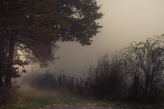 The Magic of the Moment . . . (Netsrak) Tags: baum eifel europa europe forst herbst landschaft natur nebel rheinland rhineland wald autumn fall fog forest landscape mist nature tree trees woods bäume zaun fence hff