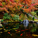 Pond of Hase-dera Temple, Kamakura : 鎌倉・長谷寺 妙智池