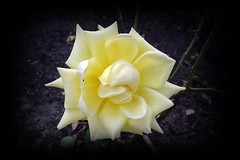 Schönes Wochenende (Gartenzauber) Tags: floralfantasy