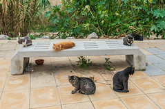 HBM! from Conil's cats (suzanne~) Tags: conil cat bench monday animal outdoor spain andalusia