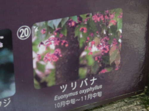 仙石原湿性花園