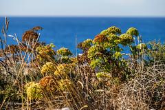 Cascais, Portugal (Jose Antonio Abad) Tags: agua joséantonioabad mar paisaje lisboa pública naturaleza playa europa cascais portugal cascaes europe lanscape sea beach nature water regióndelisboa pt