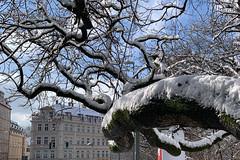 talwärts (dadiolli) Tags: haidhausen münchen munich germany snow schnee tree baum gasteig