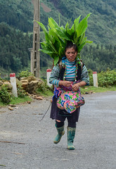 Hmong woman walking on mountain road (phuong.sg@gmail.com) Tags: agriculture asian basket china clothes colorful country culture ethnic fog green hill hilltribe hmong indochina landscape minority mountain outdoor pannier path people poverty rear rural sapa shack skep stone street sunny tourism traditional travel tribe unidentified valley vietnam vietnamese view village walk way women