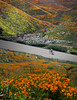 Pedal Through Petals (ShutterJack) Tags: adventure alone bicycle bike color colorful cycle cyclist exercise flowers freedom hills lane mustard painted pedal petal poppies poppy relax relaxation ride riding road solo spring wildflowers wind