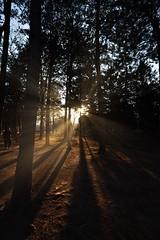Nami Island (Enson Photography) Tags: d750 nikon sunshine sun cold tree namiisland landscape beautiful winter photo trip holiday seoul korea