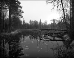 Harvikadammen (Eklandet) Tags: black blackandwhite blackandwhitephotography bw lake monochrome nature svartvitt uppland white monochromephotography harvikadammen naturelandscape naturephotography tree forest foresttrees water lakereflection lakeside lakeshore lakescape
