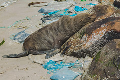Polluted (EpicIvo) Tags: ifttt 500px coastal shallow rocky ocean beach seal plastic polluted pollution hars grain africa