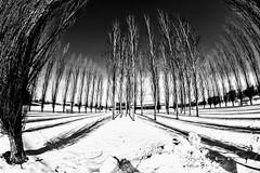 Trees and Snow (pmorris73) Tags: arboretum pennstateuniversity statecollege pennsylvania century 2cb0319 3cb0319 4cb0319 5cb0419 6cb0419 7cb0619 8cb0919 9cb1219 1kb1919