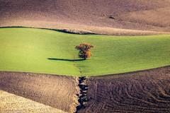 Solitario (SDB79) Tags: albero campagna verde terra molise ururi