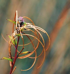 Great Art picks up where Nature End (barbara_donders) Tags: natuur nature herfst fall autumn colorful kleurrijk bokeh macro beautiful magical magisch mooi prachtig artistiek artistic art kunst