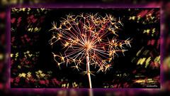 The sparkling flower (andantheandanthe) Tags: creativity close up macro trix photoshop adobe flower colors sparkling