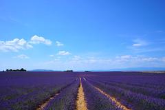 Valensole (Luiszw) Tags: lavanda valensole sony sel2870 a7mk2 a7ii campo violeta