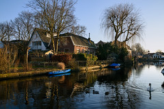 Abcoude (Julysha) Tags: abcoude d810 2018 february winter thenetherlands sigma241054art angstel river birds swan village boats