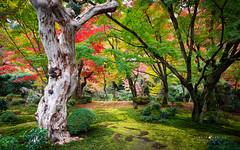 Momiji peak (Sergio Luelmo Images) Tags: momiji kyoto temple koyo autumn japan maple