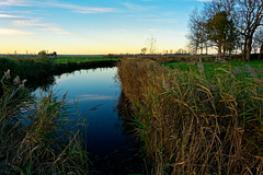 Go To The Mirror (Alfred Grupstra) Tags: nature water lake reflection grass landscape outdoors river sky swamp marsh scenics blue summer tree ruralscene reedgrassfamily pond wetland plant 944