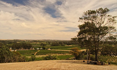 Barossa Valley (sonofwalrus) Tags: barossavalley vineyard canon eos7d slr southaustralia australia countryside landscape tree eucalyptus gumtree winery bethany vines grapes