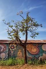 Tree of . . . something.