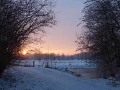 Sunrise Over Snow Landscape (Marit Buelens) Tags: landscape winter snowlandscape snow sneeuw sunrise zonsopgang belgië belgium flanders westvlaanderen bruges brugge sintkruis assebroek gemeneweidebeek natuurreservaat naturereserve pool frozen tree willow pollard knotwilg