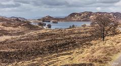"Loch Tarff, between Fort Augustus and Whitebridge on the B.862, in a shot reminicent of the ""rabbit"" scene in the classic 1983 film, ""Local Hero."" (Scotland by NJC.) Tags: lakes lochs reservoirs waters meres tarns ponds pool lagoon lago 湖 jezero sø meer järvi lac see λίμνη 호수 innsjø jezioro озеро hill تَلّ colina 小山 brdo kopec bakke forhøjning landskabet heuvel mäki colline hügel λόφοσ collina 丘 언덕 ås wzgórze deal холм backe เขาเตี้ยๆ tepe coğrafya пагорб đồi remote distant isolated inaccessible farflung secluded outoftheway faraway outlying wild unspoiled natural remoto 遥远的 udaljen odlehlý fjern ver kaukainen suidheviewpoint fortaugustus lochtarff scotland"