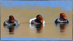 One is unlike the others... (RKop) Tags: springgrovecemetery cincinnati ohio raphaelkopanphotography d500 600mmf4evr 14xtciii nikon