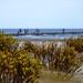 Beach Wildflowers