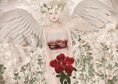 Fallen Angel (Gabriella Marshdevil ~ Trying to catch up!) Tags: sl secondlife cute kawaii doll sorumin limerence gosee angel fantasy persefona