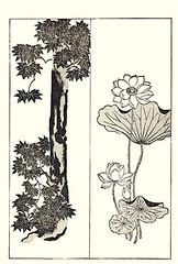 Right - sacred lotus (Japanese Flower and Bird Art) Tags: flower sacred lotus nelumbo nucifera nelumbonaceae korin ogata iwajiro terada rinpa woodblock picture book japan japanese art readercollection