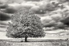 Dreaming of the Tree... (Ody on the mount) Tags: anlässe bäume em5ii hdr himmel mzuiko2518 omd olympus pflanzen rosfeld schwäbischealb solitär wanderung wolken bw clouds monochrome mystisch sw sky soft trees