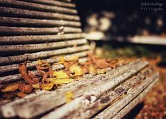Winter garden (Mister Blur) Tags: bench fallen leaves coursurloire laloire france winter mood garden shallow depthoffield dof profundidaddecampo bokeh blur snapseed harold budd nikon d7100 50mm f18 rubén rodrigo fotografía nikkor