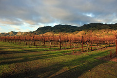 Catching the Afternoon Light (JB by the Sea) Tags: napavalley napa winecountry california december2018 winery vineyard chimneyrock chimneyrockwinery