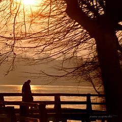 sul lago dorato (pamo67) Tags: pamo67 onthegoldenlake tramonto sunset albero tree rami branches passerella catwalk oro gold silhouette uomo man pasqualemozzillo square controluce backlight