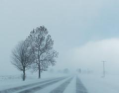 A Blustery Day Today (joeldinda) Tags: road roxana wind paved michigan snow roxandtownship eatoncounty omd em1ii 4420 tree em1 january weather omdem1mkii olympus 2019 winter 29365