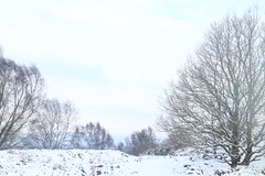 Snow on the Hill Fort (Dave Roberts3) Tags: snow winter trees branches newport gwent wales landscape hilltop hillfort gaer