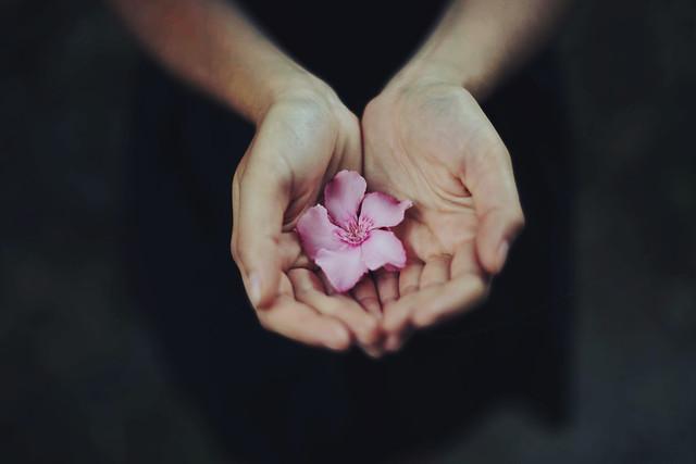 Обои цветок, руки, лепестки картинки на рабочий стол, раздел цветы - скачать