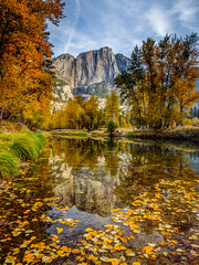 Yosemite Fall Morning Reflection (Jeff Sullivan (www.JeffSullivanPhotography.com)) Tags: morning reflection yosemite national park fall colors photography workshop yosemitenationalpark yosemitevalley yosemitevillage mariposacounty california usa nature landscape travel night photographer canon eos 5d mark iv photo copyright 2018 jeff sullivan october