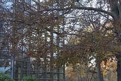 Es herbstelt am Schloss Rheydt (borntobewild1946) Tags: moenchengladbach mönchengladbach schlossrheydt herbstherbsteln november2018 niederrhein nordrheinwestfalen rheinland herbststimmung copyrightbyberndloosborntobewild1946