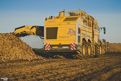 Sugar Beet Harvest | ROPA TIGER 6 Harvester (martin_king.photo) Tags: sugar sugarbeet ropa ropatiger yellow sky blue clouds bluesky powerfull martin king photo machines strong agricultural greatday great czechrepublic welovefarming agriculturalmachinery farm workday working modernagriculture landwirtschaft martinkingphoto moisson machine machinery huge big agriculture tschechische republik power dynastyphotography lukaskralphotocz day fans work place sugarbeetunloading ropatiger6 autumn cold new