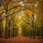Autumn avenue thumbnail