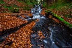 Cappucino Falls (Wow! EXPLORED 3/11/18- Thank You!) (john&mairi) Tags: waterfall kilpatrickhills autumn canyon gorge leaves beech moss scotland