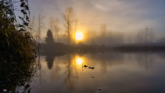 Golden Morning (Sworldguy) Tags: sunrise foggy pond trees fall moody sky sun tree landscape golden glowing reflections water sunrays wide sonya73 warm serene foilage