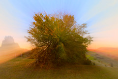 Powertree 😃 (mapemolilly) Tags: herbst autum tree zoom nature natur experimental trees autumn colorful mysty