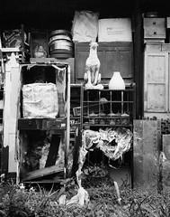 Hong Kong flotsam & jetsam (a.pierre4840) Tags: olympus xa 35mm f28 35mmfilm ilford ilfordhp5 hp5 hp5plus bw blackandwhite monochrome noiretblanc