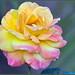 Multi-Color Bloom