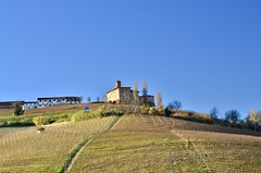 Vicinity of Barolo (Waldek P.) Tags: italy alpi alps włochy langhe piemonte piemont italia barolo grapes grapevine winorośl inogrono
