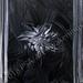 """""""Black Dahlia"""" by Lori R, acrylic, $40.00"""