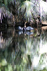 DSC_7402 (Fido Cat) Tags: nature frippisland southcarolina birds storks woodstork herons greenheron midnightheron egret